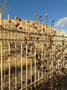 Boise Cemetery Bush & Fence